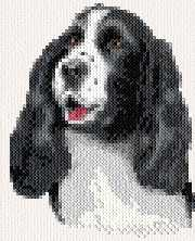 cross stitch pattern Molley