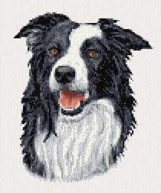 Knitting Pattern For Border Collie Dog : Border Collie Cross Stitch Pattern dogs