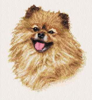 cross stitch pattern Sassy - Pomeranian