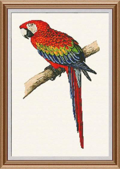 scarlet macaw cross stitch pattern parrot