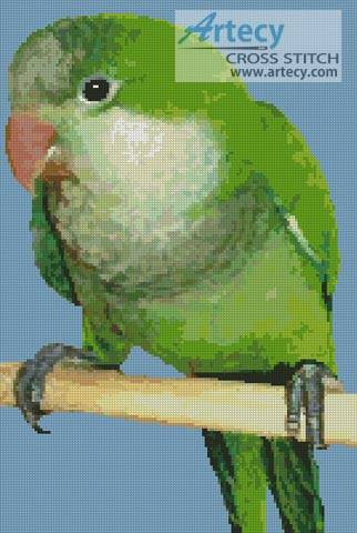 cross stitch pattern Quaker Parrot