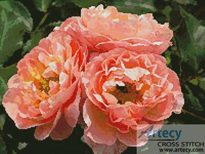 cross stitch pattern Apricot Roses