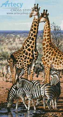 Zebra And Giraffe