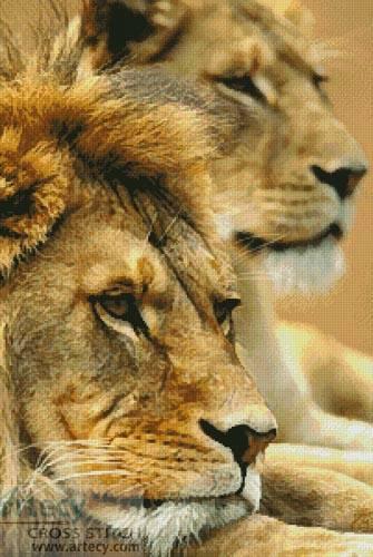 lion couple cross stitch pattern lion
