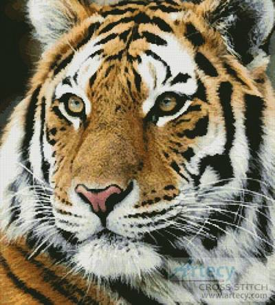 cross stitch pattern Siberian Tiger
