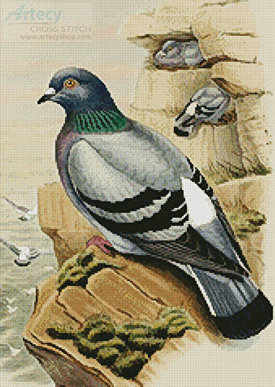 Pigeon Cross Stitch Pattern Birds