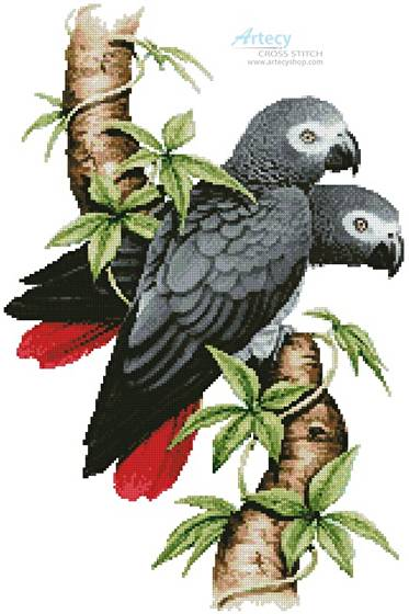 cross stitch pattern African Grey Parrots