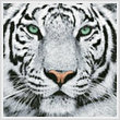 cross stitch pattern White Tiger Close Up